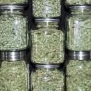 How To Store Weed Long-Term Without Losing Potency