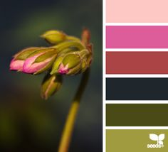 nature hues