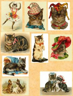 https://flic.kr/p/81QGfw | Cats | Free to use in your Art only, not for Sale on…