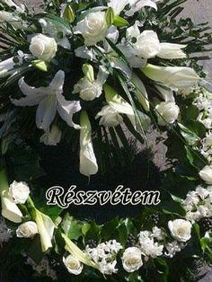 Pink Roses, Plants, Condolences, Plant, Planets, Rose