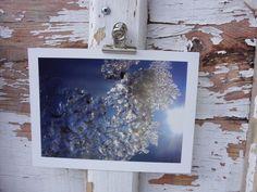 Eis im Gegenlicht, Oberammergau 2010  Abzug einer Originalfotografie, Format 13x18 nmit weißem Rand