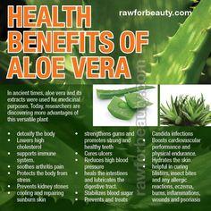 Benefits of the aloe! Awesome @Blanca Ibarra-Cordero @Alma Cordero