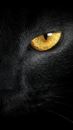 Yellow eyes ❤ hd desktop wallpaper for I Love Cats, Big Cats, Cool Cats, Cats And Kittens, Regard Animal, Animals And Pets, Cute Animals, Black Cat Art, Black Cats