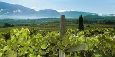 PUR Südtirol - Der Online Shop für Südtiroler Spezialitäten