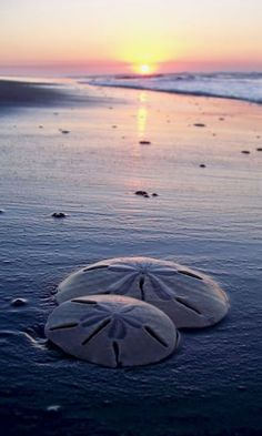 you will find a sand dollar meant just for you.  Held within are five white doves, each symbolic of an ocean energy; radiance, freedom, nature, beauty, peace