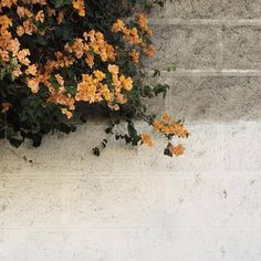 ✿Floralls✿ — by jessicacomingore