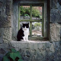 coisasdetere: Gatos & Janelas …