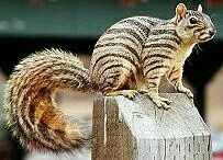 I have never seen a squirrel like this, have you?