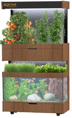Grove is a living ecosystem in your home where fresh food is always growing. Join the Growing Revolution!A Grove is a living ecosystem in your home where fresh food is always growing. Join the Growing Revolution! Backyard Aquaponics, Aquaponics Fish, Aquaponics System, Hydroponic Gardening, Organic Gardening, Home Hydroponics, Permaculture, Indoor Garden, Indoor Plants