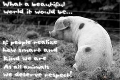 what a beautiful world it would be if people realised how smart and kind animals are; they deserve respect #vegan