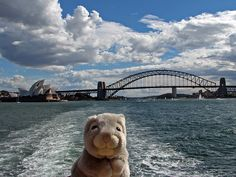 Travel bunny makes it to Sydney, Australia. (then heads off to Manly for some R before hitting the Cross for hot bunny action)     cheaper travel ever  www.muchways.com