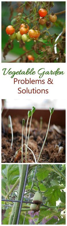 Troubleshoot your garden with these tips. #vegetablegarden, #gardeningtips