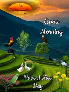 Good Morning Pictures, Images, Photos - Page 2 Very Good Morning Images, Good Morning Beautiful Pictures, Good Morning Images Flowers, Good Morning Photos, Morning Pictures, Morning Flowers, Good Morning Wishes Friends, Good Morning Cards, Good Morning Gif