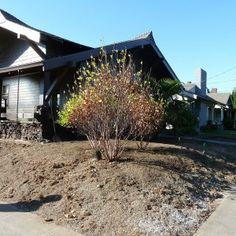 Native Garden – Creative Landscapes, Inc. Landscape Design Small, Creative Landscape, Tropical Plants, Pacific Northwest, Nativity, Woodland, Garden Design, Landscapes, Paisajes