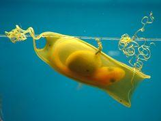 Shark egg by Rik Kiekens