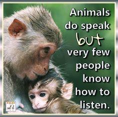Animals do speak