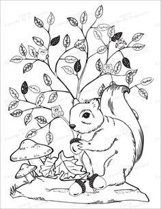 Die 20 Besten Bilder Von Eichhörnchen Coloring Pages Coloring