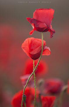 Red Spring (XI)