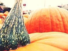 Photography by The Little Marketing Genius www.xs-marketinggenius.com #pumpkins #fall #orange