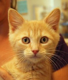 50 CUTEST ADOPTABLE KITTENS IN AMERICA
