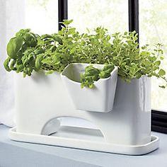 SAIC sprout planter