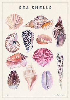 shells-700_700