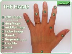 Parts of the hand and names of the fingers in English. #ESL