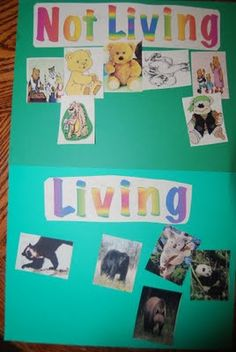 Science - classifying living and non living Going on bear hunt