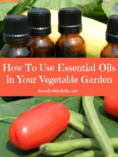 How To Use  Essential Oils in Your Vegetable Garden; A list of beneficial essential oils to use in your vegetable garden to aid growth, and repel bad bugs, and attract good bugs. Your garden will love you!