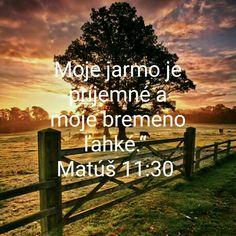 Buxus, Bible
