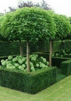 Modern Country Style: Hydrangeas, Topiary And Boxwood In The Modern Country Garden Click through for details. Modern Country Style: Hydrangeas, Topiary And Boxwood In The Modern Country Garden Click through for details. Boxwood Garden, Topiary Garden, Garden Hedges, Boxwood Topiary, Garden Landscape Design, Garden Landscaping, Landscaping Ideas, Small Gardens, Outdoor Gardens