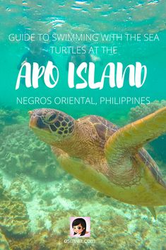 Guide to Swimming with the Sea Turtles at Apo Island, Philippines. Review of the experience of swimming with the sea turtles at the Apo Island in Negros Oriental. Includes a review of the snorkelling experience with Harolds Dive Centre. A DIY (do-it-yourself) budget and itinerary is also included for those who don't want to avail a guided tour. #seaturtles #apoisland #apoislandtour #apoislandtourpackage #apoislanddauin #negrosoriental #philippines #asia #tourpackage #osmiva