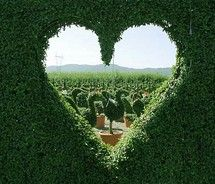 Heart through the hedge topiary