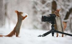 squirrels - Vadim Trunov/Solent News/REX