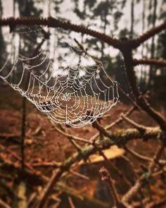 """Jarka Redneval na Instagramu: """"Sobotní ranní toulka babím létem a nemuset nikam spěchat ☺️kapičky rosy nádherně dozdobily dokonalou pavoučí krajku 🕸 Mějte se…"""""""