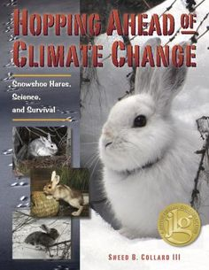 """Scientists seek to answer the critical question """"Can snowshoe hares and other animals that change their coat color each winter adapt to shorter winters caused by climate change? Gr.4-7"""