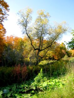 Autumn splendor Vineyard, Trees, Autumn, Plants, Outdoor, Outdoors, Fall Season, Vine Yard, Tree Structure