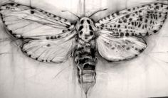 I love this idea for a tattoo of a leopard moth. Pencil Drawings, Art Drawings, Leopard Moth, Nordic Tattoo, Fine Art Drawing, Dragonfly Art, Spirited Art, Insect Art, Bugs And Insects