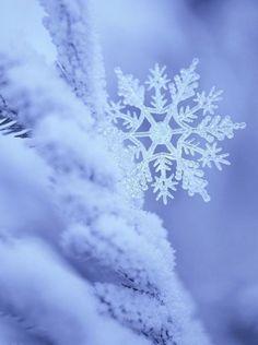 macro-photo snowflake