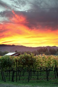Napa - love this place. If you can't get to Tuscany, it's the next best thing.