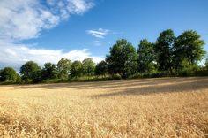 Denna bild är tagen vid Göts kanal nära Ljungsbro. #visitlinköping #visitsweden #östergötland #ljung #ljungsbro #meralink #linköping #linköpinglive #ig_great_pics #ig_captures #ig_masterpiece #ig_europe #igdaily #igsweden #igscandinavia #bestofscandinavia #love_natura #love_sweden_ #landscapelovers #landskap #landscapephotography #landscape #landscape_lovers #canon5dmarkiii #canonphotography #jonas_fotograf #fotograf #sommar #summer