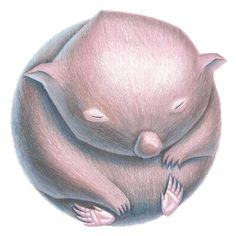 Australian Animals, Active, Wombat, Animal Cards, Illustrations, Etsy, Mood, Kitchen, Color Pencil Picture