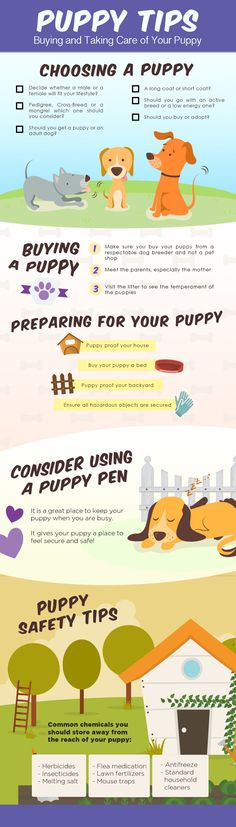 Buying and raising a puppy can be stressful. Using some of these puppy tips should, at least, prepare you! #puppytips #puppysafety