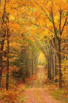 Quabbin reservoir, Massachusetts, gold, autumn, trail, forest, photo
