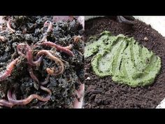 Boost compost worm growth using DIY dry food, more worms mean more poop :) - YouTube