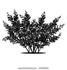 Risultati immagini per arbusto silhouette