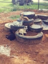 Image result for keeping goat hooves trim using cement blocks