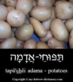 """How to say """"Potatoes"""" in Hebrew. Click here to hear it pronounced by an Israeli: http://www.my-hebrew-dictionary.com/potatoes.php"""