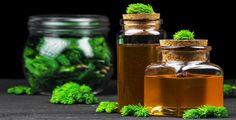 Léčivé účinky smrku jsou známé již po staletí Salsa, Honey, Jar, Food, Syrup, Essen, Salsa Music, Meals, Yemek