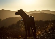 Puppy Hike by Eugene Wen on 500px